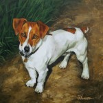 portrait commission of a jack russel in oils on canvas